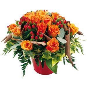 jardin de roses oranges