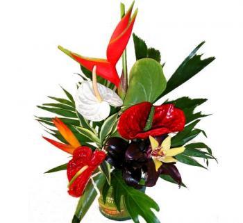 composition de fleurs exotiques livraison sur nancy. Black Bedroom Furniture Sets. Home Design Ideas