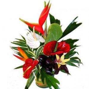 Des fleurs exotiques et colorées