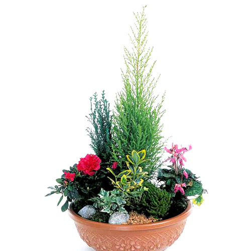 Coupe de plantes androm de - Plantes qui ne craignent pas le gel ...