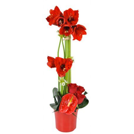 L'Amaryllis pour décorer votre table de noël