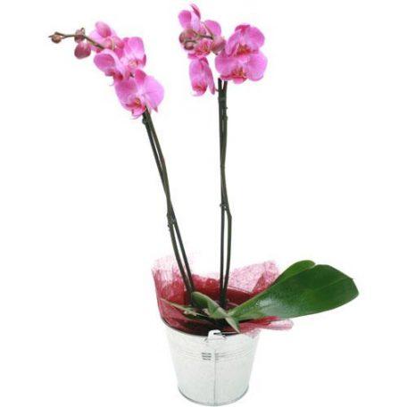 belle orchidée pour vos compositions florales