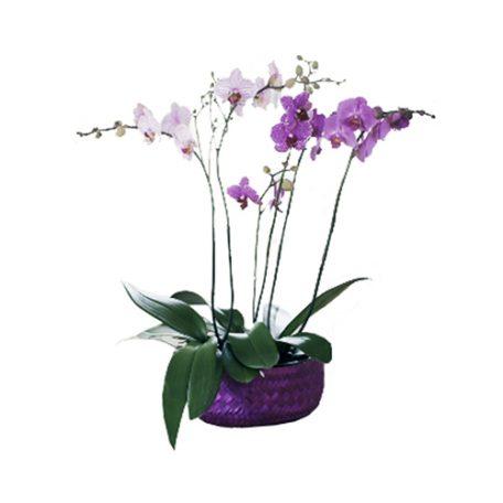 cadeau floral une belle orchidée