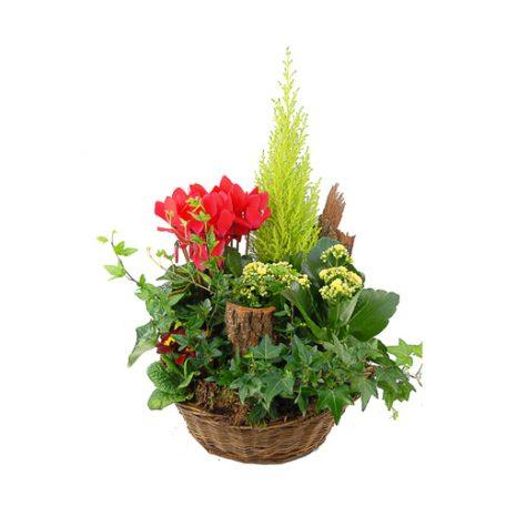 coupe de plantes toussaint