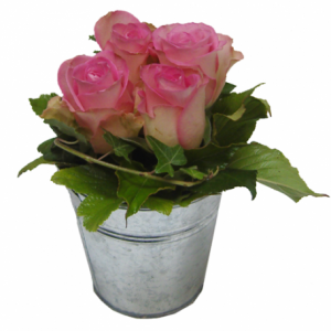 Petit jardin de roses roses dans base en alu